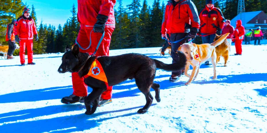 Search and Rescue Dog Forum